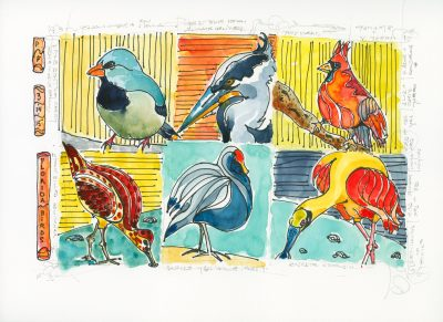 Florida Birds - ©Patricia Feito